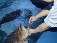 VIDEO: Un pește răpitor de la un acvariu îl lasă pe îngrijitor să-i spele dinții