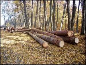 VIȘEU DE SUS: Amenzi aplicate de către polițiști agenților economici care își desfășoară activitatea în domeniul exploatării lemnului