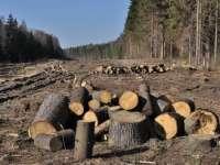 Vişeu de Sus și Borșa - Activităţi pentru combaterea delictelor silvice
