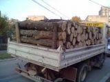 Vişeu de Sus și Ocna Șugatag - Sancțiuni pentru delicte silvice și transportul ilegal de material lemnos