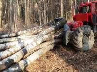 VIȘEU - Material lemnos și un TAF confiscate de poliţişti