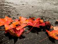 Vreme rece în următoarele două săptămâni în Maramureș
