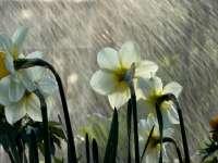Vreme rece, vânt puternic și ploi în toată țara, de sâmbătă seară până miercuri
