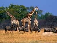 Zimbabwe vinde animalele sălbatice din rezervațiile naturale ca să le scape de secetă