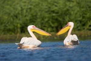 Ziua Mondială a Zonelor Umede. Află câte situri Ramsar există în România