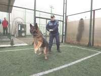 Ziua porților deschise la Poliția Maramureș. Exerciţii demonstrative de dresaj și tehnică de luptă prezentate vizitatorilor