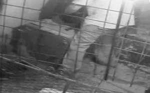 VIDEO: Zoofil din Dâmboviţa, surprins de camerele de supraveghere în timp ce viola găinile unei vecine