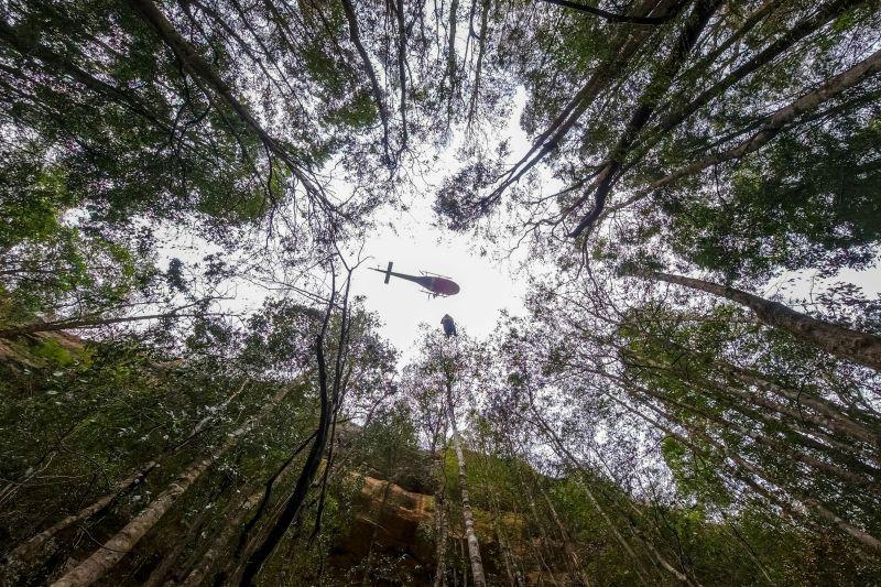 Australia - Misiune secretă pentru salvarea unor arbori preistorici