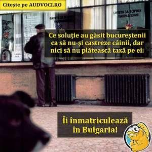 Câini înmatriculați în Bulgaria :)