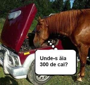 Calul... întreabă de cai :)