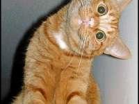 Cum reacționează pisicile la apă? :)