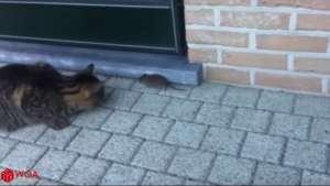 FUNNY VIDEO - Pisici care nu știu cum să reacționeze când întâlnesc șoareci :))