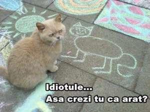 Pisic supărat :)