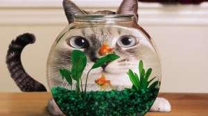 Pisica vs. peștișor :)