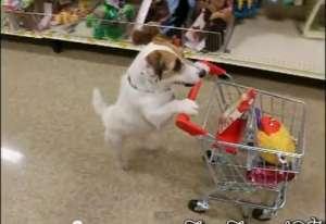 VIDEO - Cel mai util câine într-o casă: Face micul dejun, curățenie, cumpărături și multe altele :)