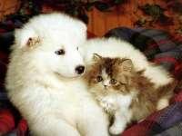 VIDEO FUNNY - Caini și pisici... prieteni