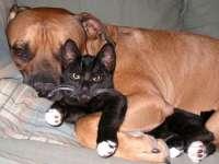 VIDEO FUNNY - Câini... speriați de pisici!