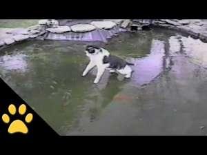 VIDEO FUNNY - O pisică încearcă să prindă pește aflat sub gheață :)