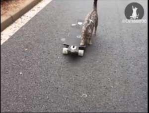 VIDEO - PISICILE VOR DOMINA LUMEA: O pisică se dă singură pe skateboard :)
