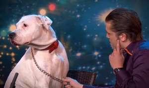 "VIDEO - Un câine ""cu talent"" cântă melodia Whitney Houston, ""I will Always Love You"""