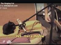 VIDEO - Un DUO de succes format dintr-o pisică și stăpânul acesteia :)