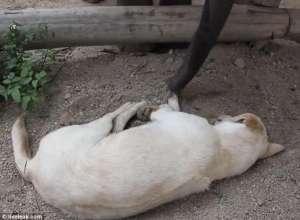 VIDEO: Un pui de elefant încearcă să trezească un câine - very funny :)