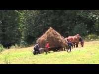 VIDEO - Un țăran demonstrează că este... Prostul satului